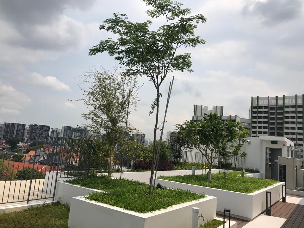 Community Roof Garden